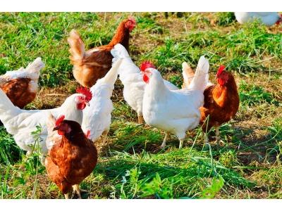 Модульный цех убоя птицы (Куры, бройлеры, индейка, перепела)