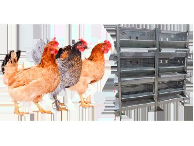 Оборудование для разведения и содержание птицы от компании Итека