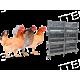 Разведение и содержание птицы