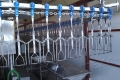 Поставка и запуск в работу автоматической линию убоя водоплавающей птицы для АО Племптицефабрика Юбилейная.
